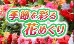Bnr_flower