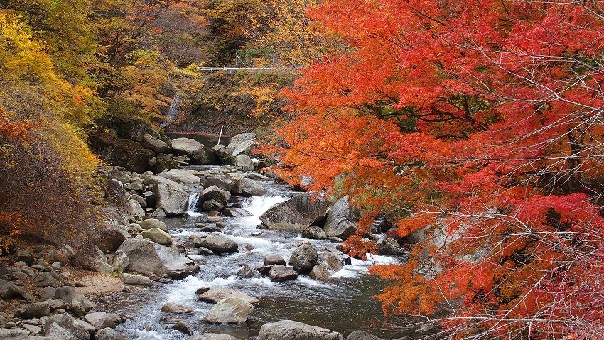長野県下伊那郡売木村 丸畑渓谷の紅葉