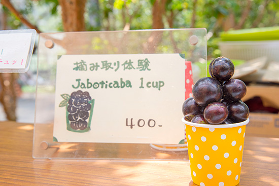 農園カフェ Cafe Jaboticaba(カフェ ジャボチカバ)